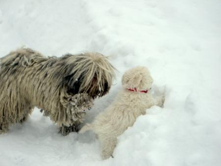 Komm, wir spielen im Schnee